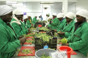 From Kilimo Biashara Launch, a CARE Denmark and FDB project: women workers at Sunripe factory